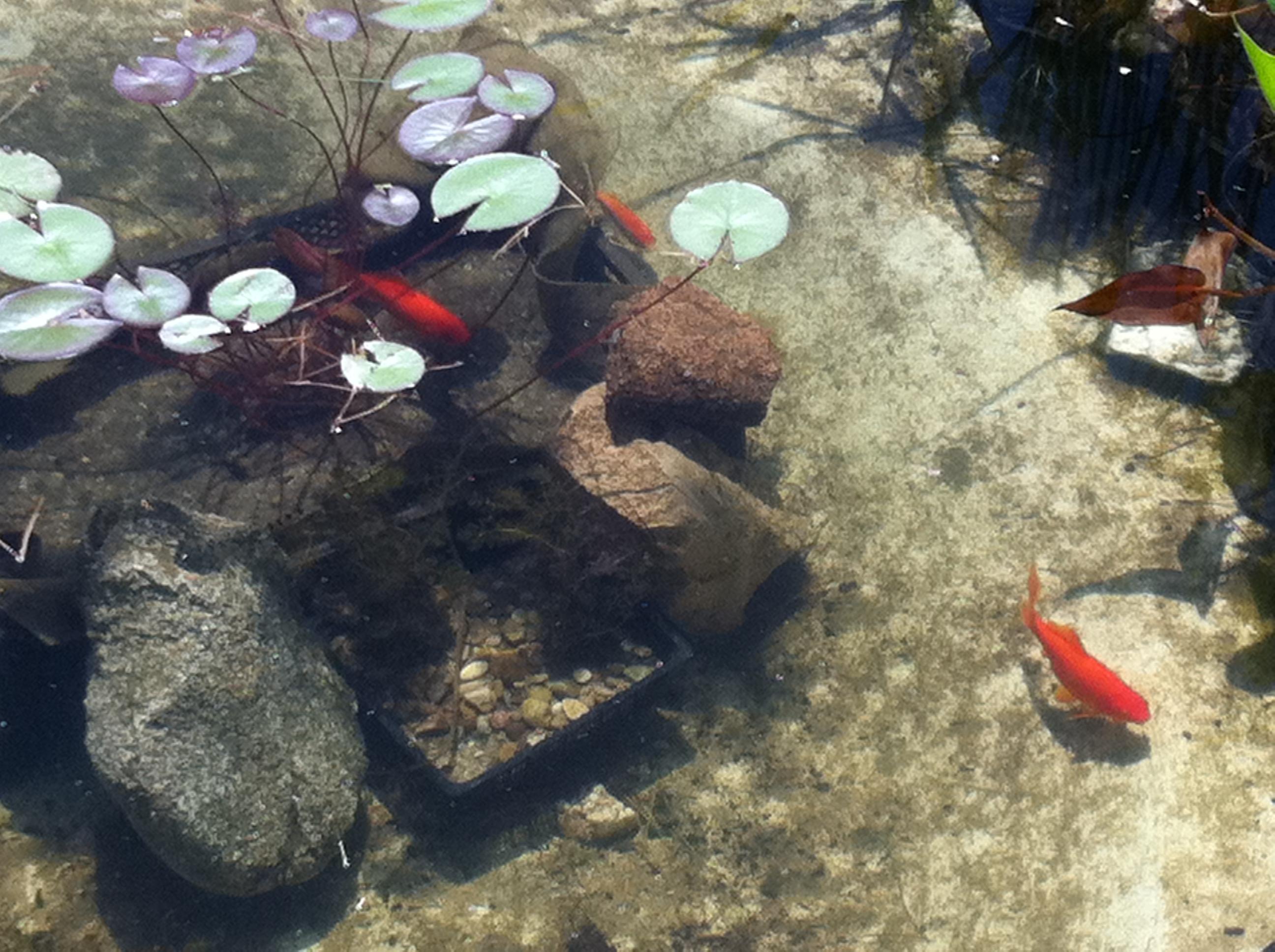Piscinas naturales piscinas diferentes for Construccion albercas naturales